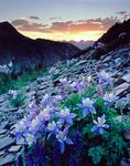 Columbine at sunset in Vestal Basin, Weminuche Wilderness, Colorado