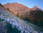 Columbine, Broken Hand Peak & Crestone Needle, Sangre de Cristo Wilderness, CO
