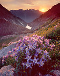Columbine in Ruby Basin at sunset, with Ruby Lake and the Twilight Peaks in the distance, Weminuche Wilderness, Colorado