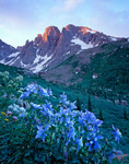 Columbine and the Turret Needles at sunrise, Ruby Basin, Weminuche Wilderness, Colorado