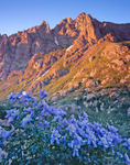 Columbine and Animas Mountain at sunset, Ruby Basin, Weminuche Wilderness, CO.