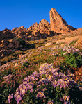 Columbine and Animas Mountain at sunset, Ruby Basin, Weminuche Wilderness, Colorado
