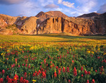 Indian paintbrush & White Dome, Grenadier Range, Weminuche Wilderness, Colorado