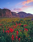 Indian paintbrush and Peak Two at sunset, Grenadier Range, Weminuche Wilderness, Colorado