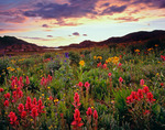 Indian paintbrush above Elk Creek at sunset, Weminuche Wilderness, CO