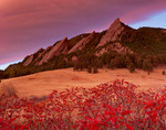 Sumac in fall colors and the First, Second and Third Flatirons (collectively, The Flatirons), Boulder Mountain Parks, Colorado