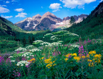 Wildflowers and the Maroon Bells, Maroon Bells-Snowmass Wilderness, White River National Forest, CO