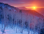 Sunrise over aspen grove on Beaver Mountain, Rocky Mountain National Park, Colorado