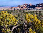 Fremont's mahonia and towers in Chesler Park, Canyonlands National Park, Utah