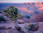 Dead Horse Point at sunrise, Dead Horse Point State Park, Utah