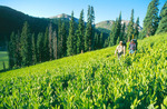 Robert Himber and Greg Chenu backpacking on the Continental Divide Trail near Piedra Pass, Weminuche Wilderness, Colorado