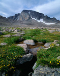 Alpine avens and stream in the Boulderfield, Longs Peak, Rocky Mountain National Park, Colorado