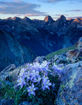 Columbine, the valley of Elk Creek and the Grenadier Range at sunrise from the southern edge of the Highland Mary Lakes plateau, Weminuche Wilderness, Colorado