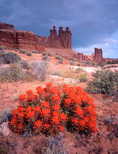 Indian paintbrush and the Three Gossips, Arches National Park, Utah