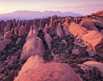 Fins in the Devils Garden area and the La Sal Mountains, Arches National Park, Utah