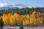 Longs Peak and aspen from Beaver Meadow after an early-fall snowstorm, Rocky Mountain National Park, Colorado