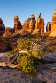 The Doll House at sunrise, Maze District, Canyonlands National Park, Utah