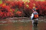 Tom Wall fishing the Fryingpan River, near Aspen, Colorado