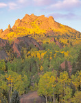 Aspen on McCurdy Mountain at sunrise, Lost Creek Wilderness, Colorado