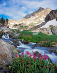 Mt. Neva and parry primrose, Indian Peaks Wilderness, Colorado