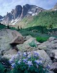 The Turret Needles and columbine, Weminuche Wilderness, Colorado