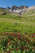 Kings crown in American Basin, Handies Peak Wilderness Study Area, Colorado