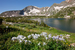 Savage Peak and columbine, Missouri Lakes region, Holy Cross Wilderness, Colorado