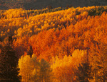 The west side of Buffalo Pass at sunset in late September, near Steamboat Springs, Colorado