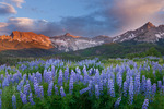 Lupine, Wolcott Mountain, Mears Peak and Peak 13,134 at sunset, Mt. Sneffels Wilderness, Colorado
