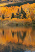 Aspen reflected in Woods Lake, Uncompahgre National Forest, Colorado