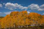 A perfect early October day in the Uncompahgre National Forest, Colorado