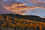 Sunset light ignites a cloud over an aspen grove in the Uncompahgre National Forest in early October, Colorado