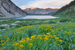 Arrowleaf groundsel, mountain bluebells, Snowmass Lake and unnamed peaks above Snowmass Creek at sunset, Maroon Bells-Snowmass Wilderness, Colorado
