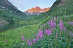 Fireweed, Maroon Lake and the Maroon Bells, Maroon Bells-Snowmass Wilderness, Colorado