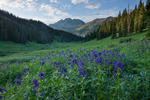 Western larkspur and Snowmass Mountain, Hagerman Peak and Snowmass Peak, Maroon Bells-Snowmass Wilderness, Colorado