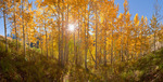 180-degree panorama of aspen grove in Lead King Basin in late September, Maroon Bells-Snowmass Wilderness, Colorado