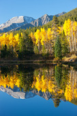 Mt. Hope reflected in a beaver pond near the South Mt. Elbert trailhead in late September, San Isabel National Forest, Colorado