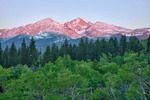 Longs Peak from aspen grove on the western flank of Twin Sisters after the last snowstorm of the year on June 15, Rocky Mountain National Park, Colorado