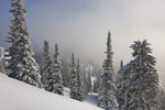 Frosted trees and fog along Huntsman Ridge, proposed Hayes Creek wilderness area, White River National Forest, Colorado