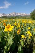 Peak 13,134 and mule's ears, Mt. Sneffels Wilderness, Colorado