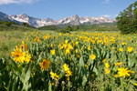 Wolcott Mountain, Mears Peak, Peak 13,134 and mule's ears, Mt. Sneffels Wilderness, Colorado