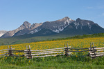 Hayden Peak, Peak 13,134 and mule's ears along Last Dollar Road, near Ridgway, Colorado