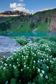 Mountain willow-herb (epilobium saximontanum) near Blue Lake, Mount Sneffels Wilderness, San Juan Mountains, Colorado