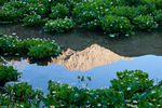 Mount Sneffels reflected in a pond surrounded by marsh marigolds, Mount Sneffels Wilderness, San Juan Mountains, Colorado