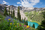 Wildflowers, Dallas Peak and Blue Lake, Mount Sneffels Wilderness, San Juan Mountains, Colorado