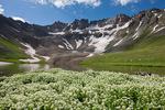Mountain willow-herb (epilobium saximontanum) and upper Blue Lake, Mount Sneffels Wilderness, San Juan Mountains, Colorado
