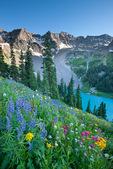 Dallas Peak, wildflowers and Blue Lake, Mount Sneffels Wilderness, San Juan Mountains, Colorado