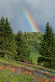 Rainbow over lupine and Indian paintbrush, Shrine Ridge, near Vail Pass, White River National Forest, Colorado