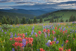 Mount of the Holy Cross, Indian paintbrush and lupine, Shrine Ridge, near Vail Pass, White River National Forest, Colorado