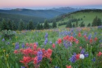 Twilight wedge over Mount of the Holy Cross, Indian paintbrush and lupine, Shrine Ridge, near Vail Pass, White River National Forest, Colorado